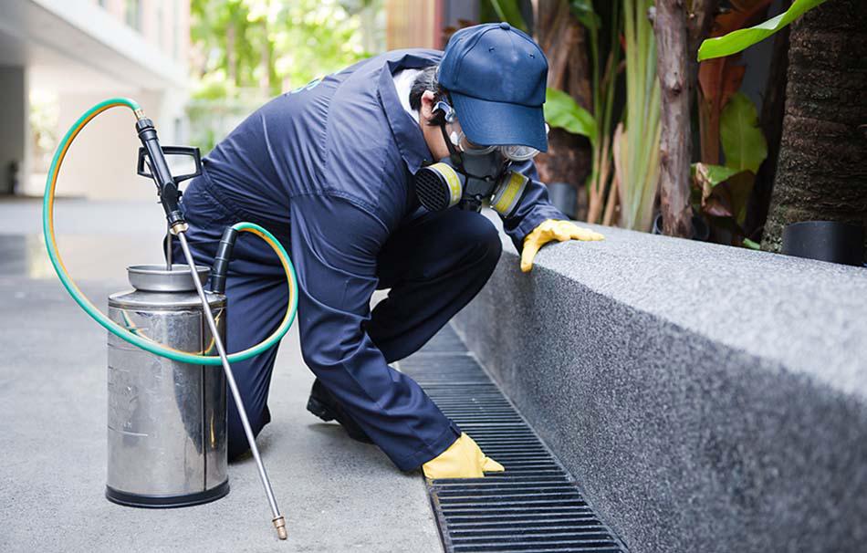 Hygiene & Pest Control